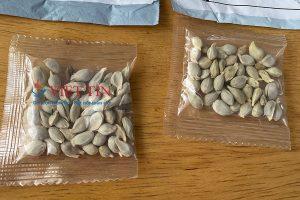 Gửi hạt giống qua Mỹ